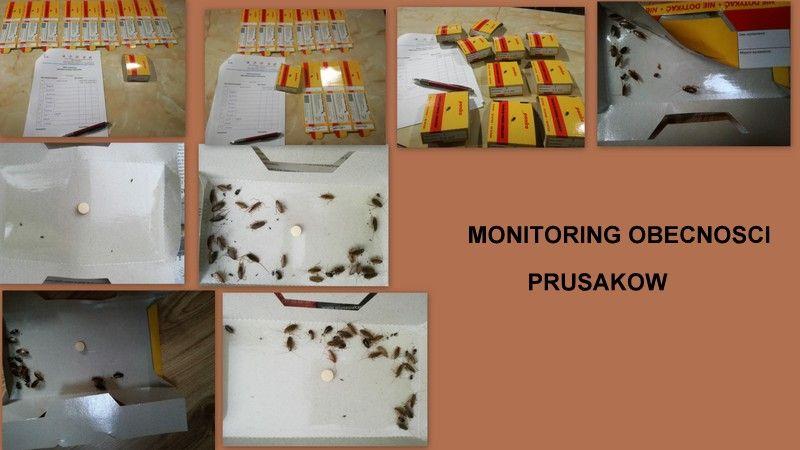 Monitoring obecności prusaków
